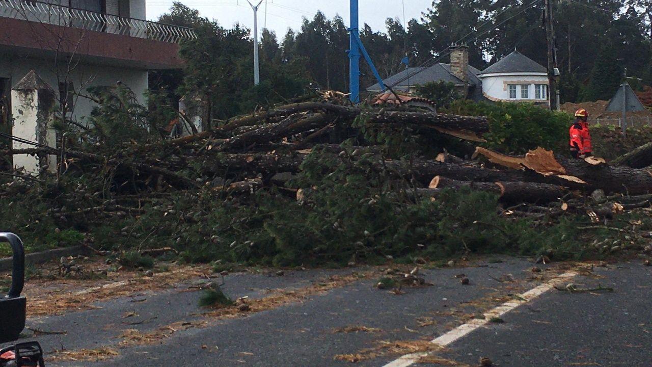 El temporal ha dejado en Galicia un reguero de árboles caídos