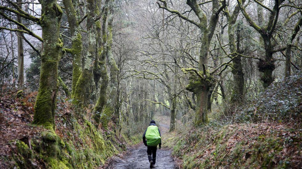 Escalada de tensión en Ucrania.Gran parte del Camino de Santiago transcurre por Galicia entre bosques autóctonos, como este tramo de A Uceira