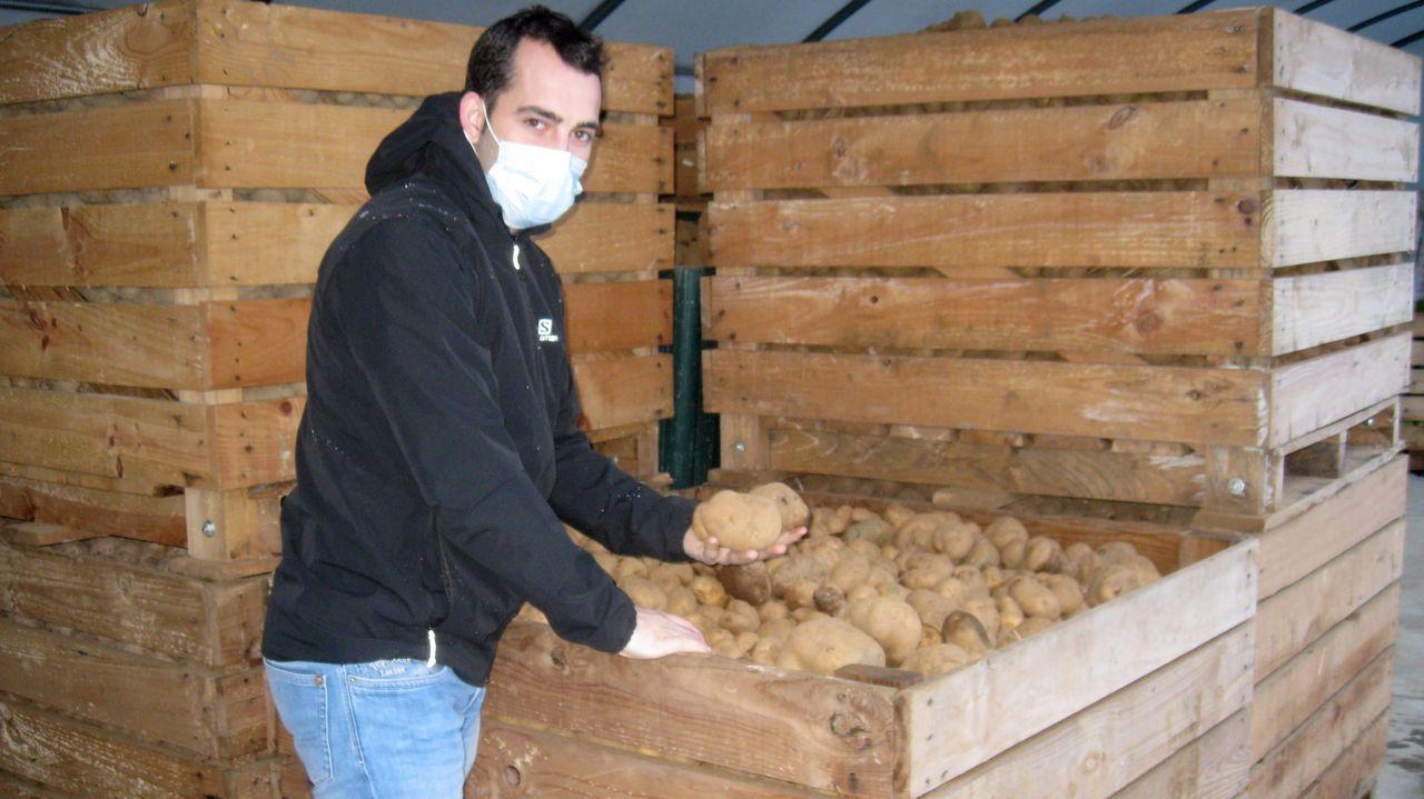 Miranda, con patatas de la variedad kennebec de la última cosecha, acadas de fincas de Pol y de Castro de Rei