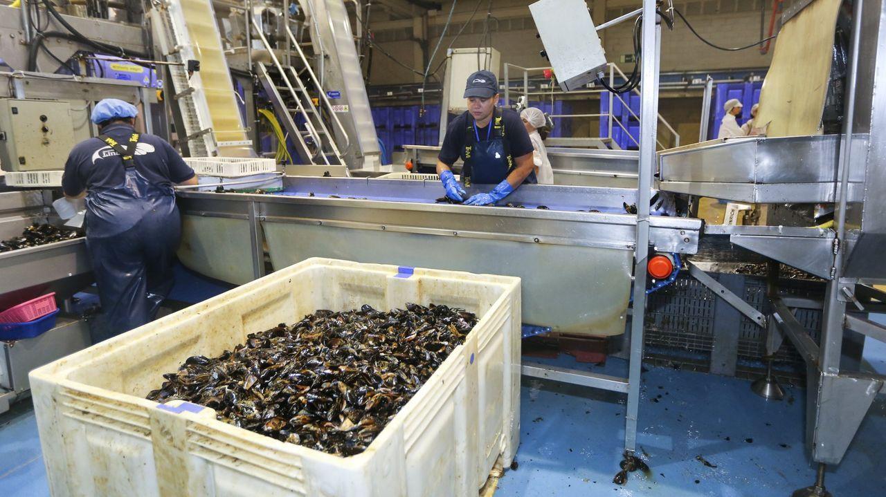 Así capean la pandemia las conservas gallegas de productos del mar.Imagen de archivo de instalaciones de Linamar en Cambados, empresa de la que es accionista Angulas Aguinaga