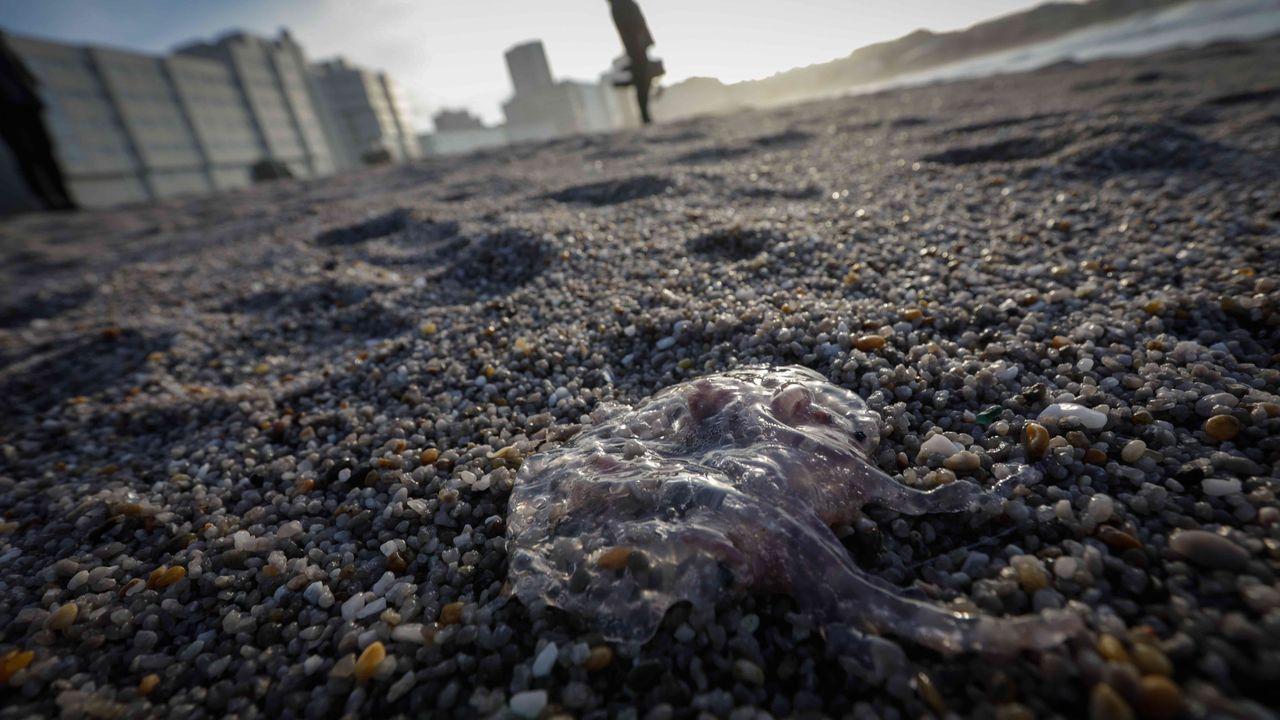 Buscan a un pescador desaparecido en O Portiño.Terraza del London, en Vimianzo