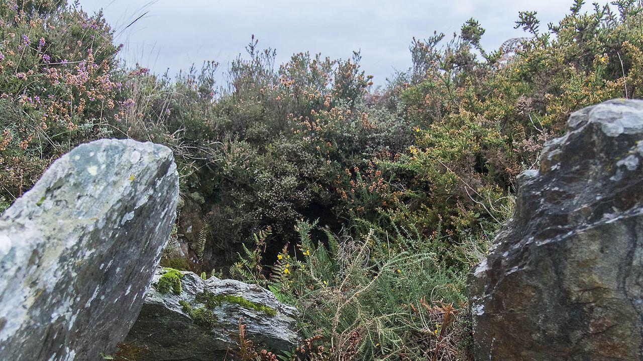 Necrópolis megalíticas en el monte de Santa Mariña (Samos)