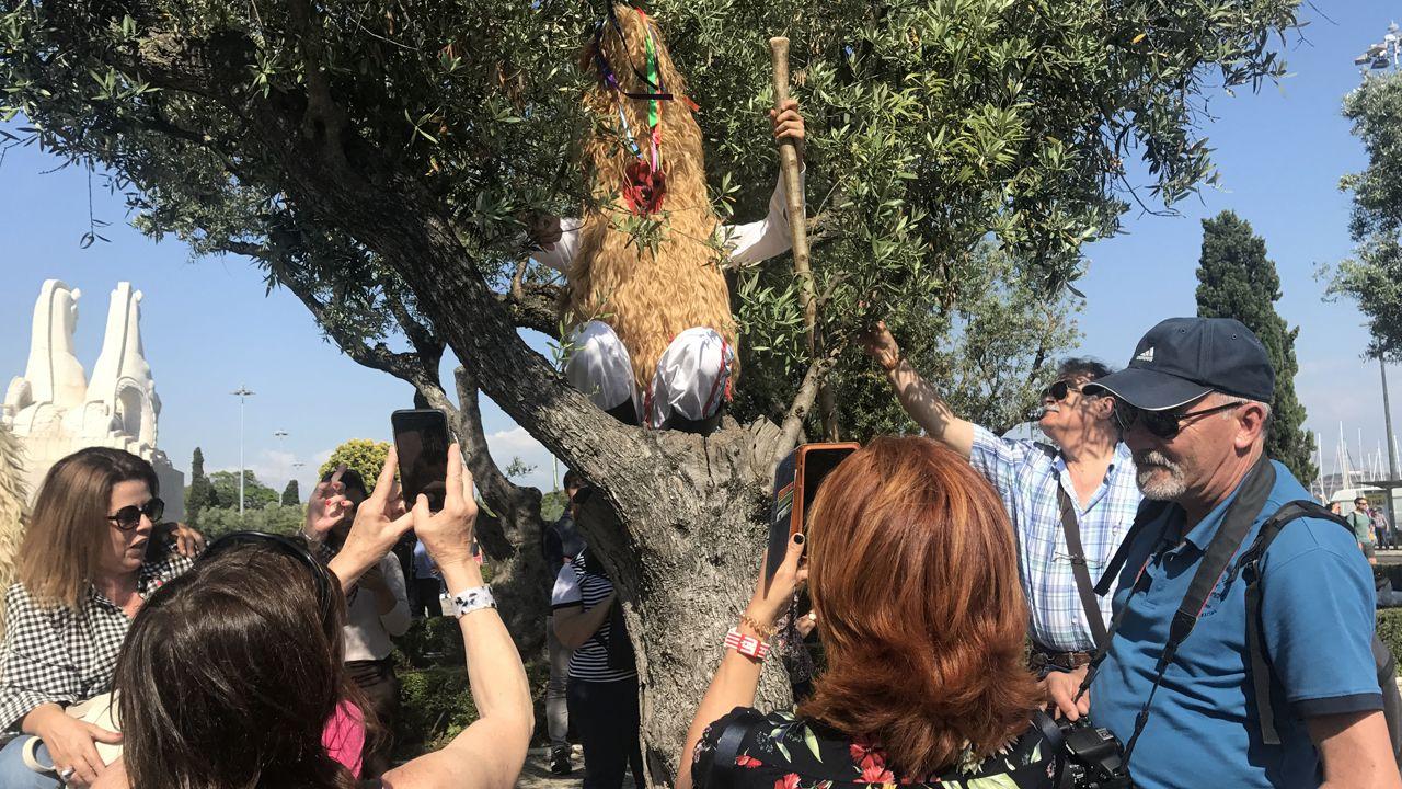 Los sidros hicieron sus traversuras y se subieron a los árboles en Belém