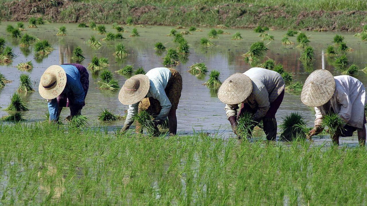 Trabajadores en un arrozal en China