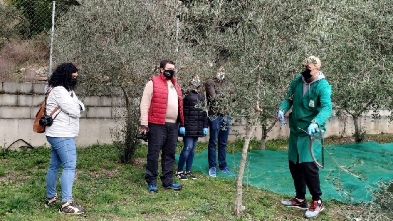 Visita guiada a un olivar de Quiroga organizada el pasado fin de semana dentro del programa turístico del consorcio de la Ribeira Sacra