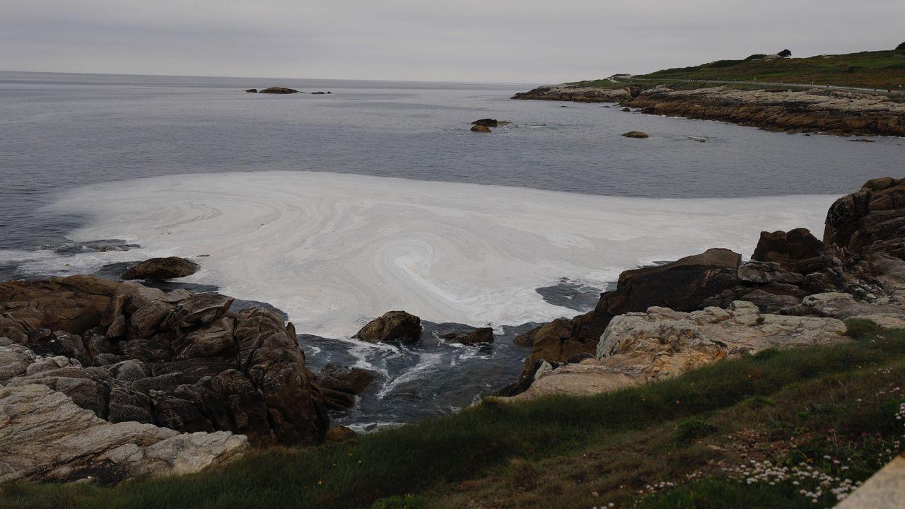 Un vehículo atropella en la calzada a una yegua y su potro.Probablemente diluida por el mar, ya ha desaparecido la mancha que apareció este jueves por la tarde en A Marosa