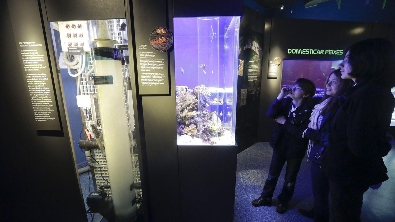 Imagen de archivo del acuario
