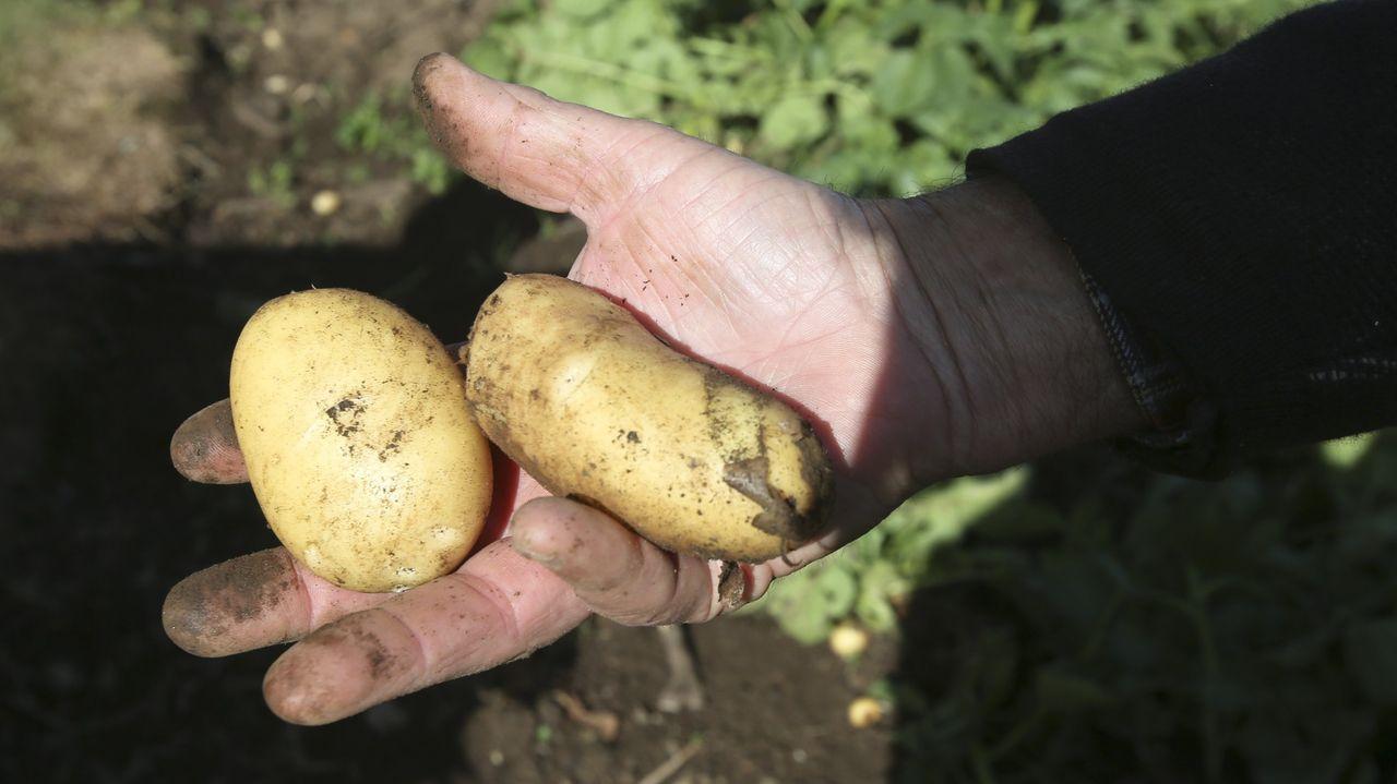 Los manzanos tienen un gran potencial en Galicia