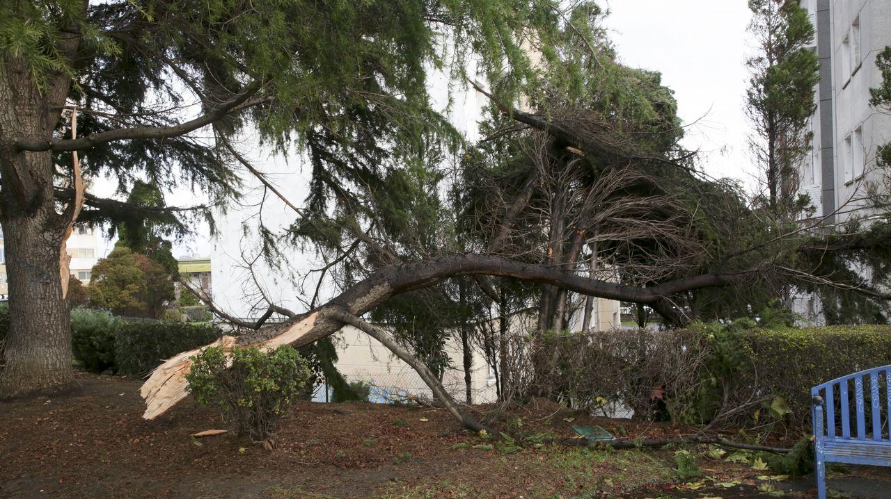 Árbol caído en el parque Europa, A Coruña