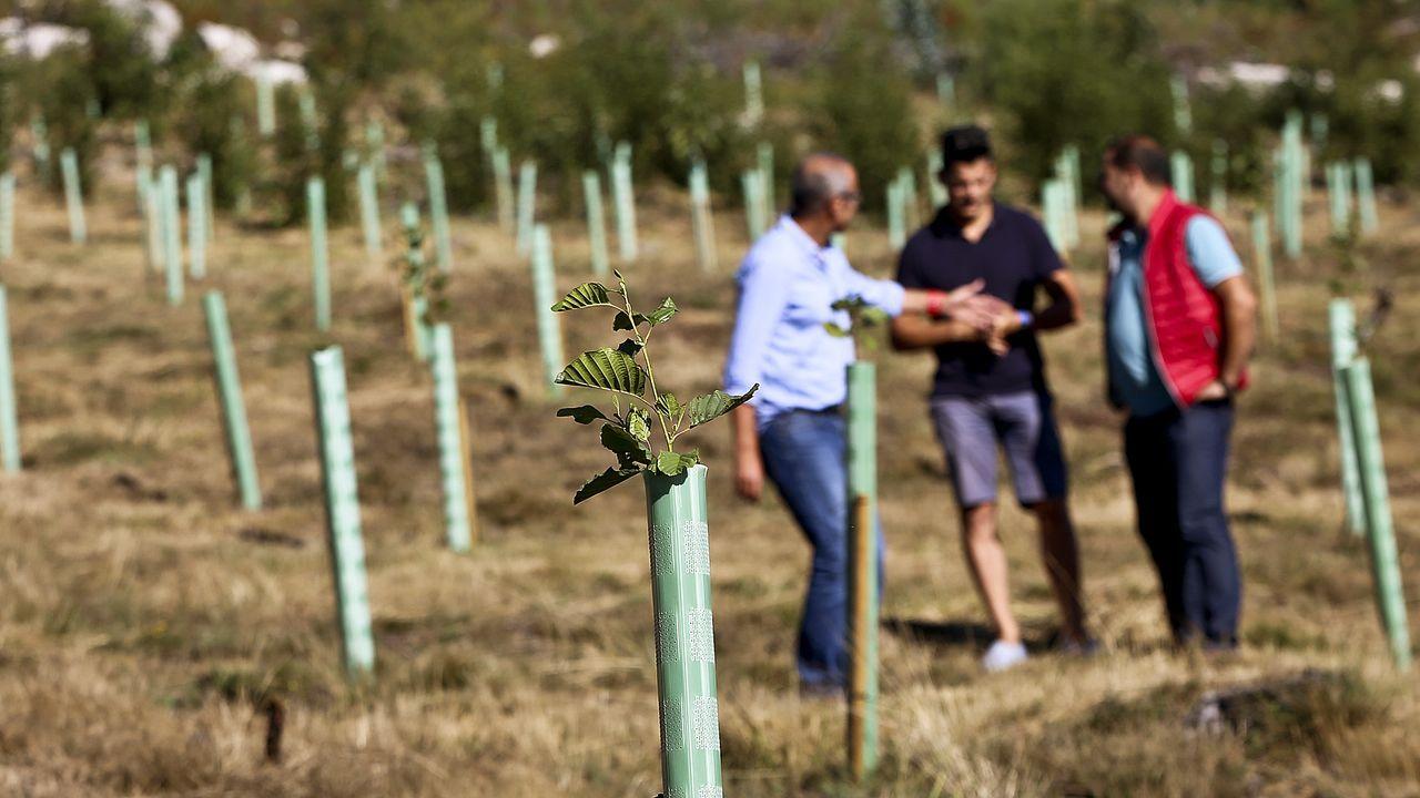 El alcalde de NIgrán y el presidente de la comunidad de montes de Chandebrito en una zona repoblada