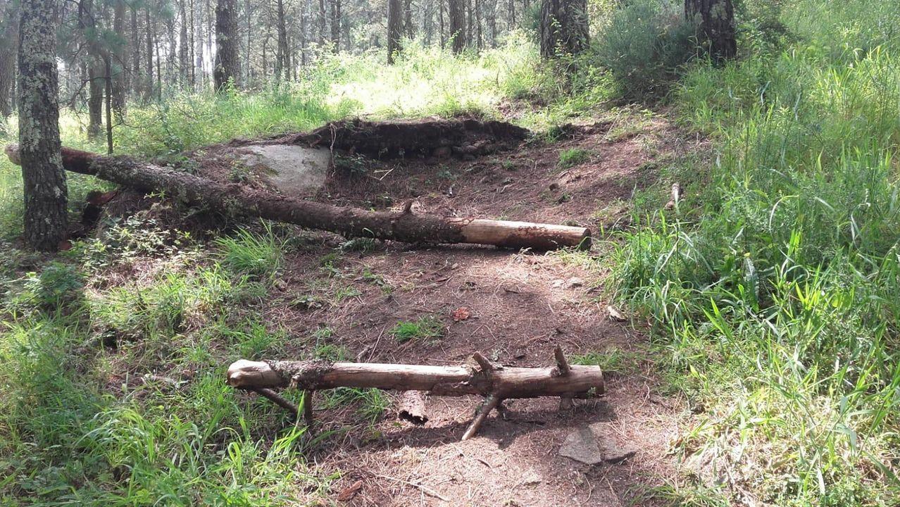 Grupos de ciclistas denuncian la peligrosidad de la trampa colocada en O Facho, dos troncos obstaculizando un sendero en pendiente, tras un punto salto