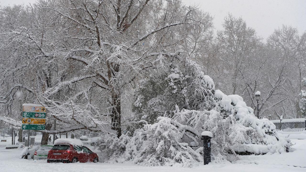 Muchos árboles han cedido con el peso de la nieve