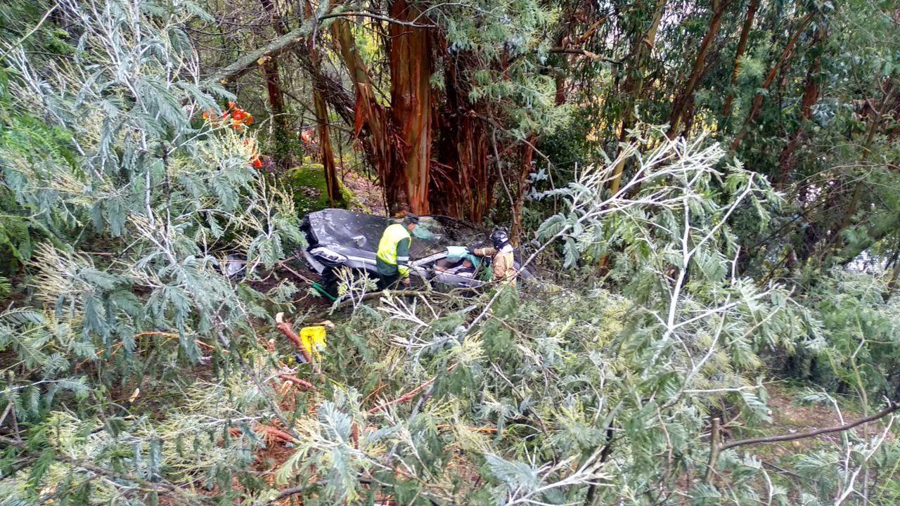 Se despeña 50 metros por la A-52.Restos de un oso pardo encontrados en Santo Adriano