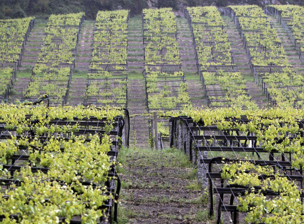 Lores sostiene que el compost podrá ser utilizado para enriquecer el suelo de los viñedos.