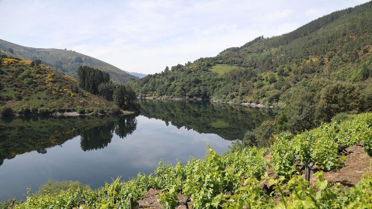 El pregón de Amaral y las demás fotos de la Feira do Viño de Amandi 2021.Zona de viñedos en el municipio de Negueira de Muñiz
