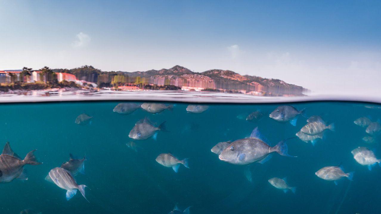 Un grupo de peces ballesta