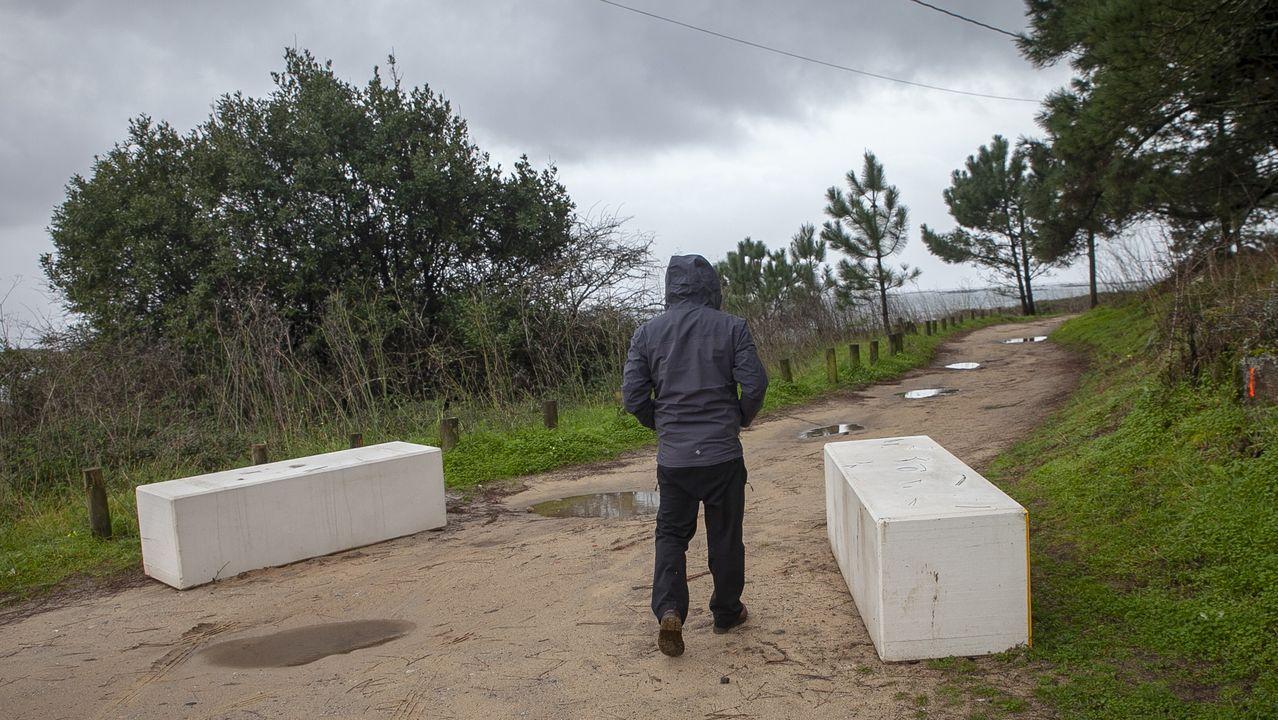 Muestras del material aparecido en Bastiagueiro será analizadas en sendos laboratorios.Perros en la playa de San Lorenzo de Gijón