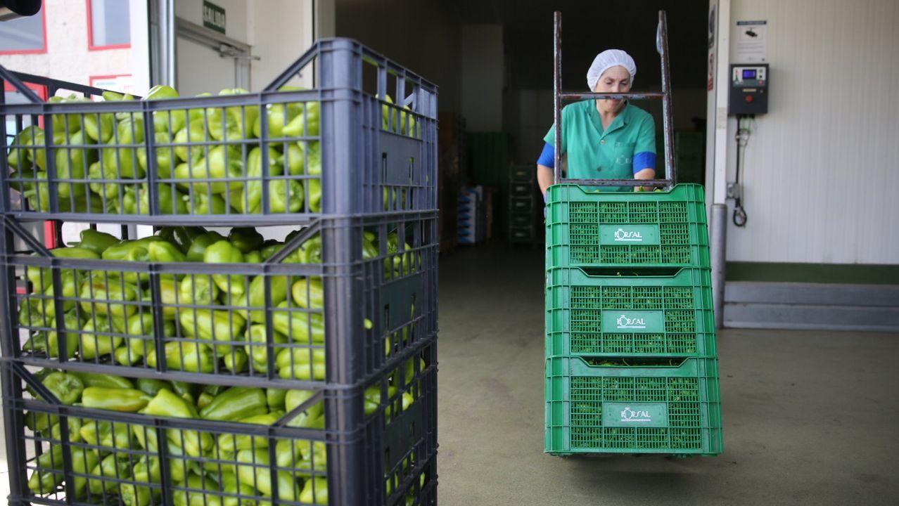 Cooperativa hortícola en la provincia de Pontevedra