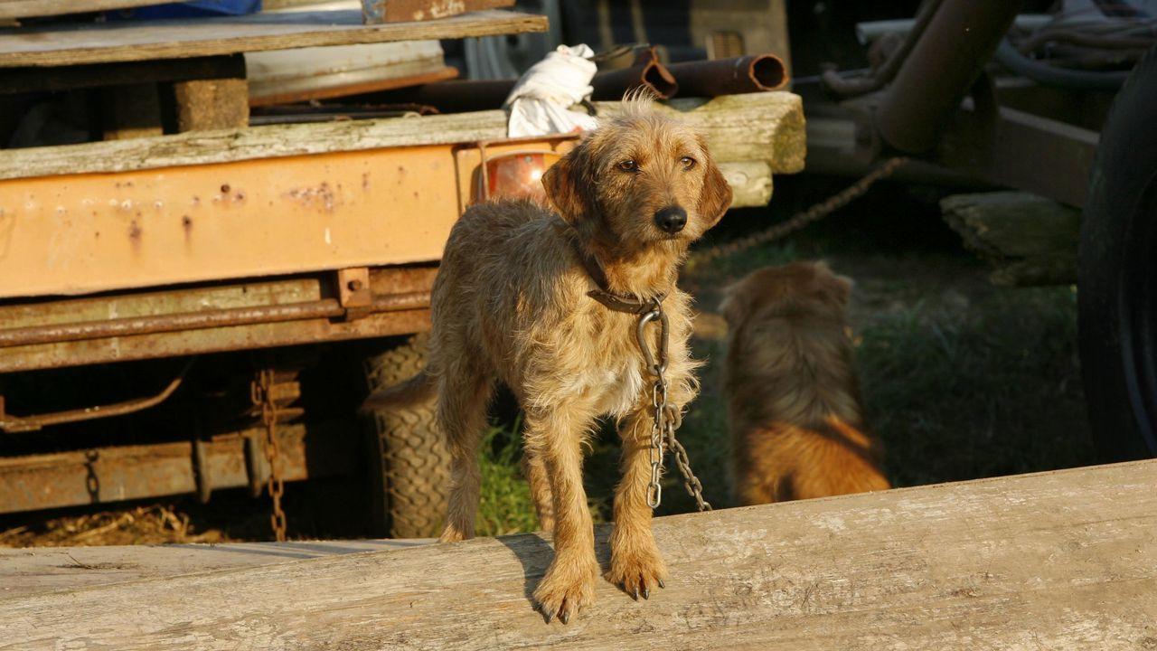 Stone, el perro que resurgió de las piedras.Imagen de archivo de una yegua