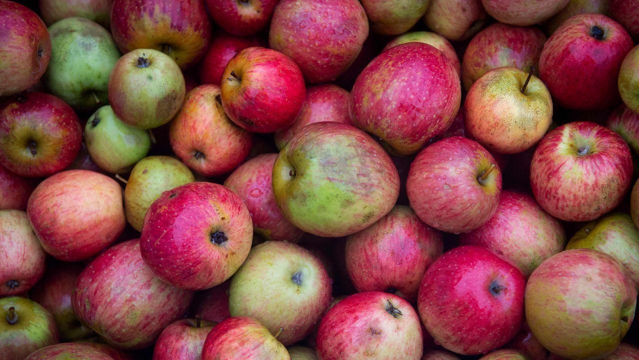El proceso de tratamiento de la manzana y elaboración de la sidra en Asturias