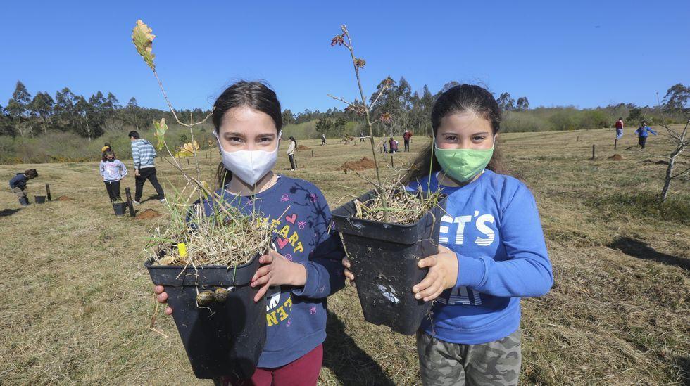 Plantación en Carballo por el Día Forestal Mundial: ¡las imágenes!.Filme The Cave