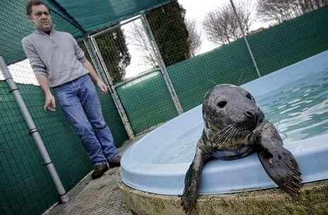 El animal descansa en la piscina bajo la mirada de uno de sus cuidadores, Jorge Pardo .