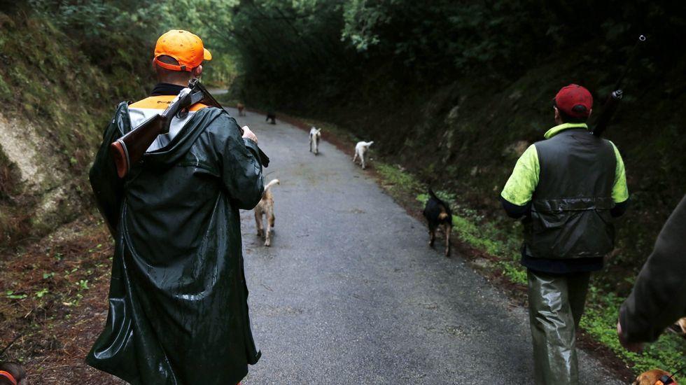Perros contra avispas asiáticas... ¿Quién ganará?.Turistas paseando en la plaza mayor de Lugo en una imagen tomada en agosto.