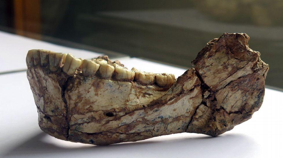 Mandíbula del fósil de Yebel Irhoud (Marruecos) que confirma el origen panafricano del «Homo sapiens»