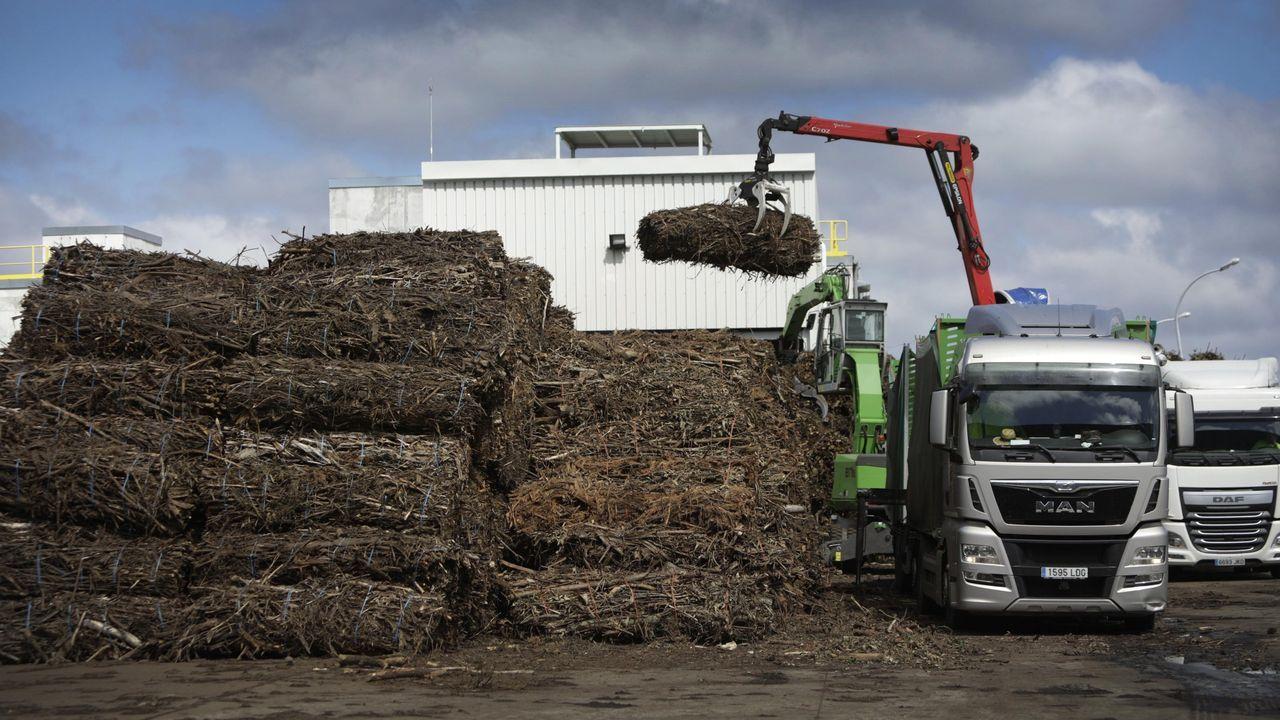 Planta de biomasa de Greenalia en el concello coruñés de Teixeiro