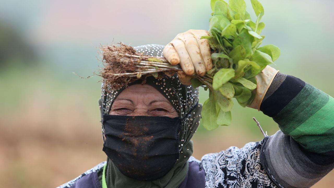 Una granjera libanesa trabaja portando mascarilla en la localidad de Houla