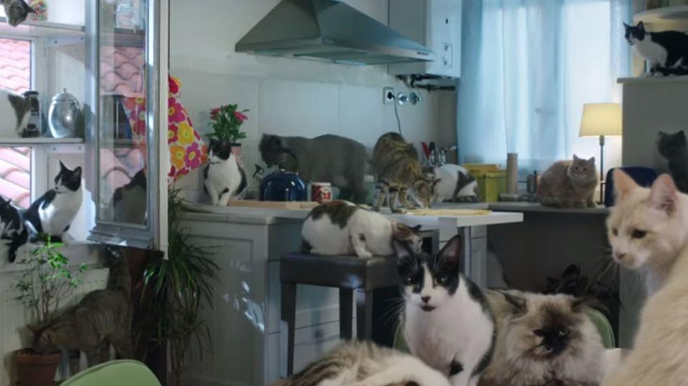 El PPse encomienda a los gatitos.Ayllón con la vicepresidenta, en una imagen de archivo