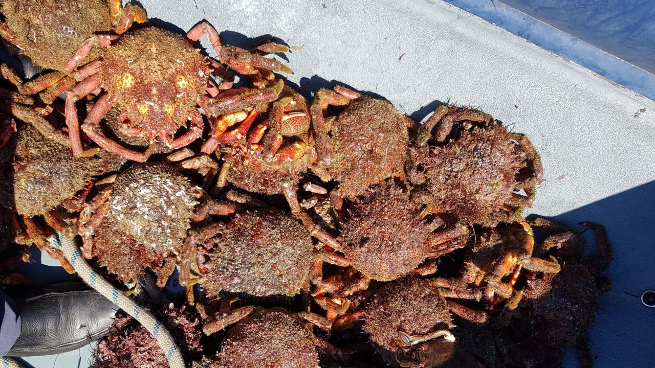 Extracción de mejilla.La playa de A Graña, en Ferrol, figura entre las que obtienen la calificación de buena