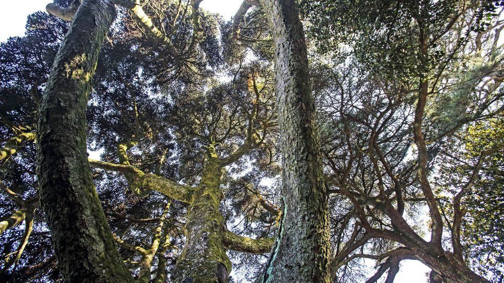 Esta es parte de la obra de autor del pintor Antón Mouzo: ¡en imágenes!.Jardín botánico del instituto Fernando Blanco (Cee)