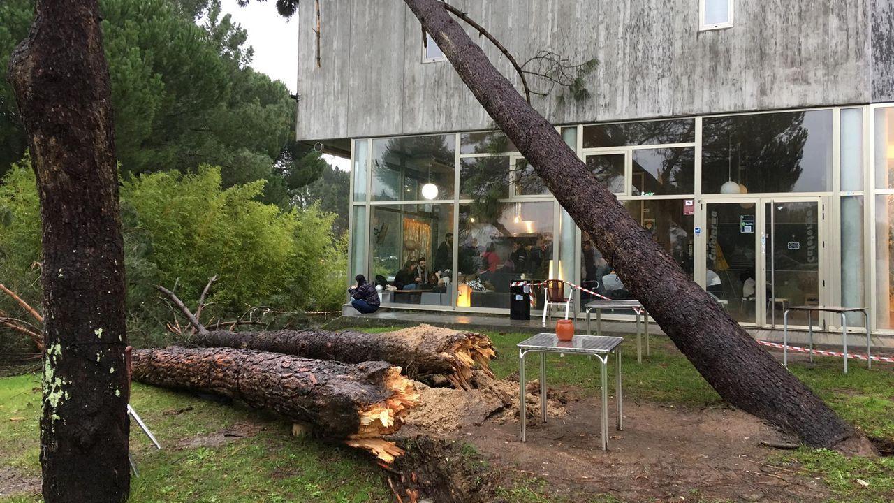 ASÍ HA CASTIGADO EL TEMPORAL A OURENSE.Árbol caído sobre la escuela de arte Antonio Faílde en Ourense