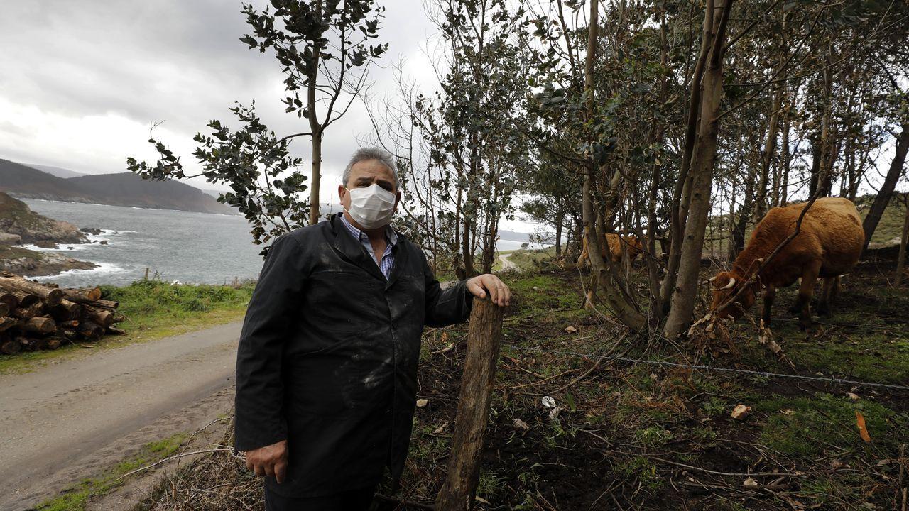 Pedro Pérez, ganadero mariñano afectado por los ataques del lobo, en su explotación en Xove