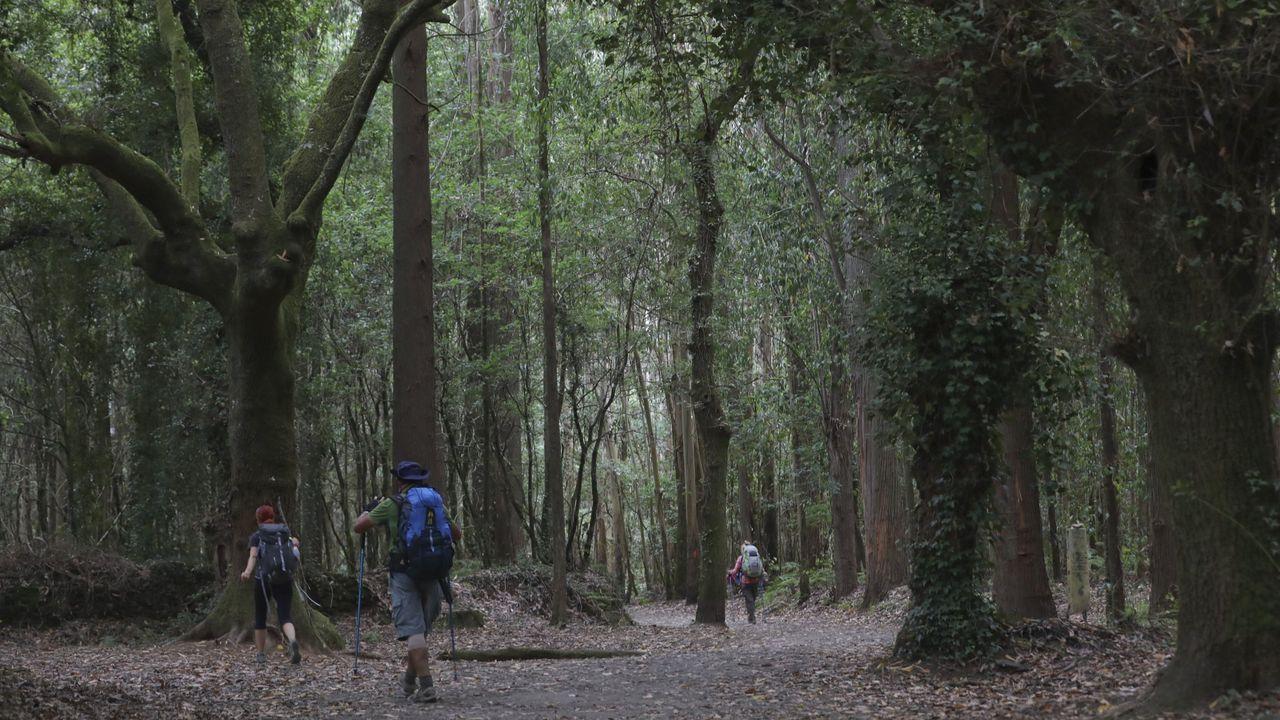 Foto de archivo de peregrinos por el Camino Francés a su paso por O Pino