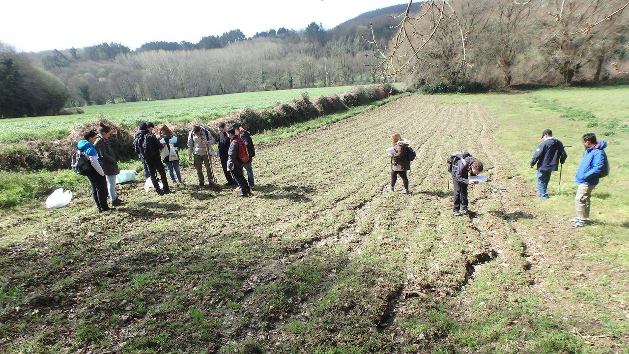 En el suelo de maiz, el suelo está compactado y se erosiona. En la pradera adyacente se siembra una pradera entre la cosecha del maiz y la siembra del siguiente cultivo para proteger al suelo de la erosión, corregir la compactación y aporta nitrógeno