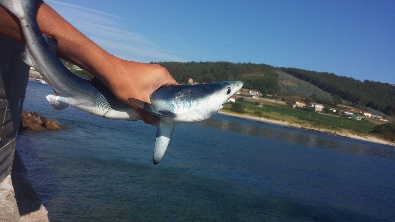 La visita de un tiburón a las cíes.Socorristas en la playa de A Frouxeira, en Valdoviño, este mes de julio