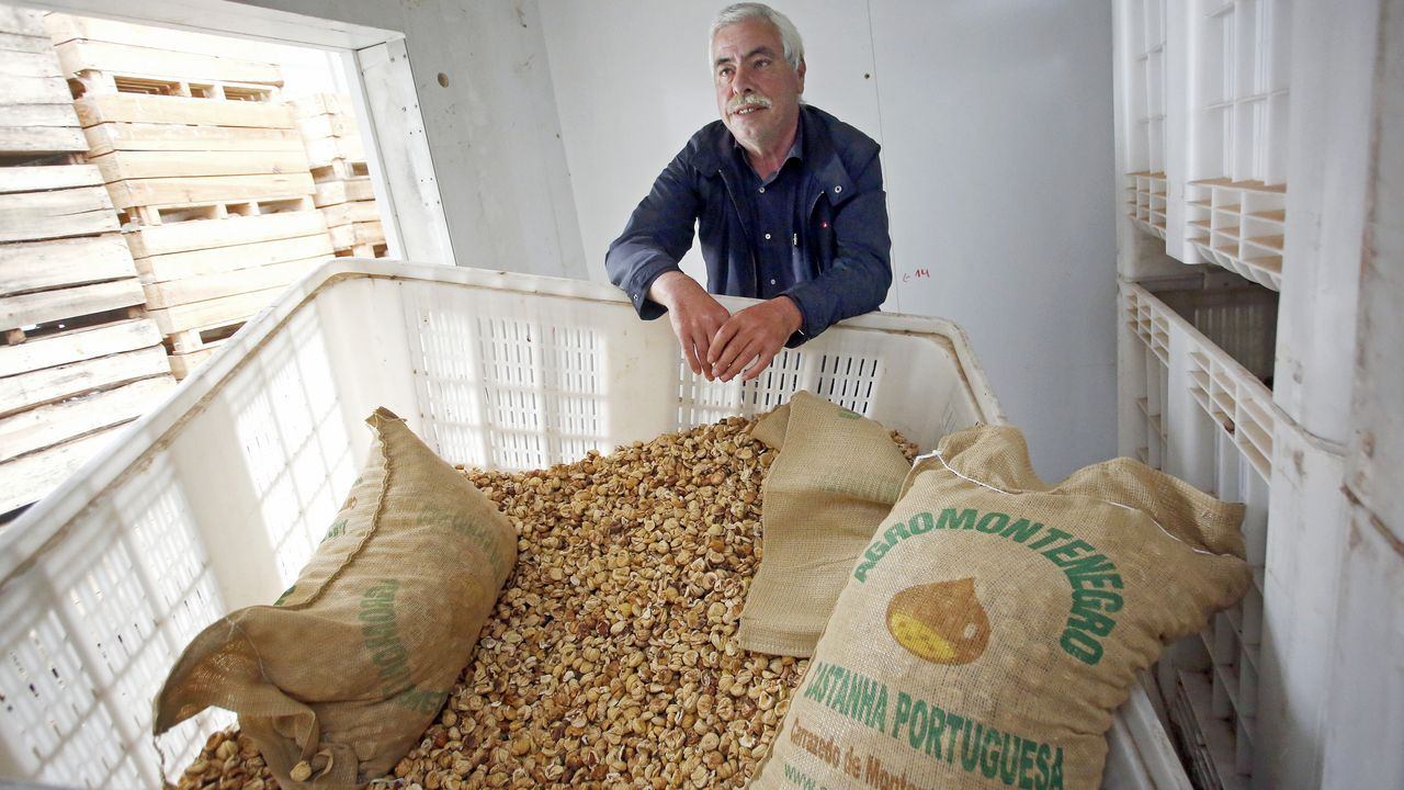Dinis Pereira muestra la castaña seca que guarda en el almacén de su empresa Agromontenegro