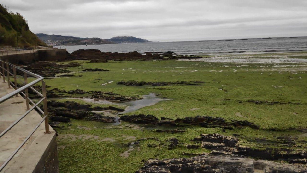 Praia Madorra.La Praia da Madorra amanecía este martes cubierta de algas verdes.