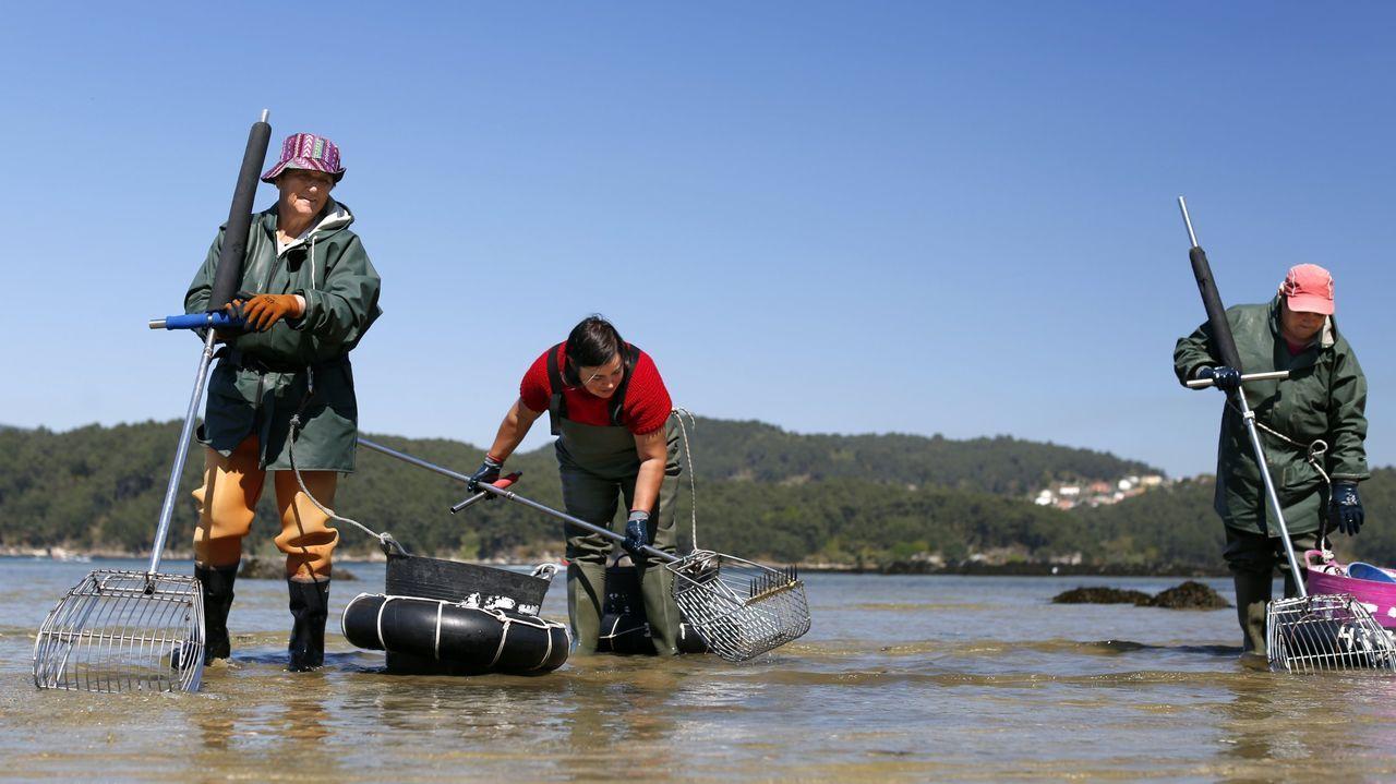 ¡Mira aquí las imágenes del inicio de la campaña marisquera de Noia!