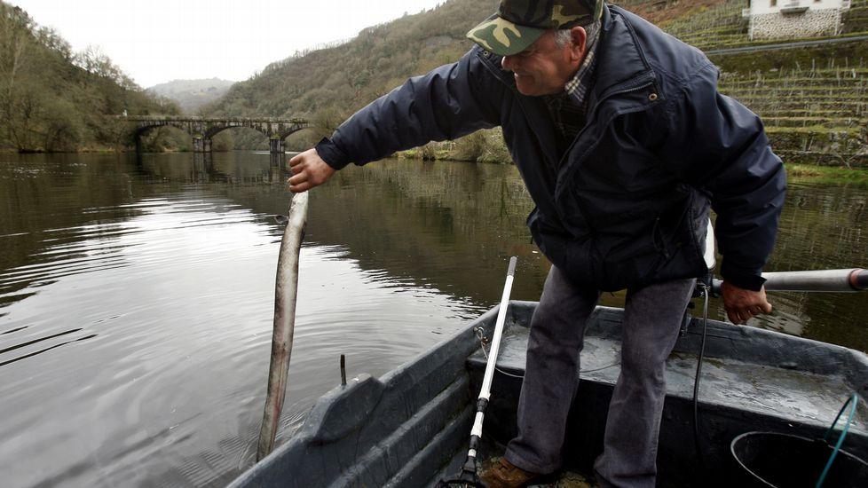 A la caza de la anguila en Belesar