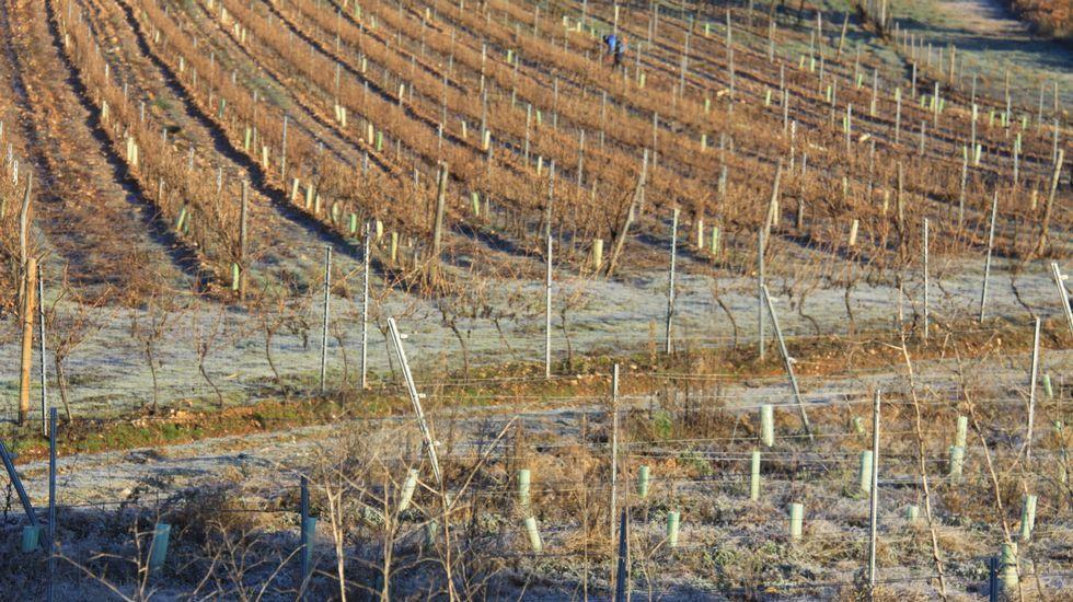 Recorrido fotográfico por la mina del Burato do Lobo.Las ayudas son para plantación de viñedo
