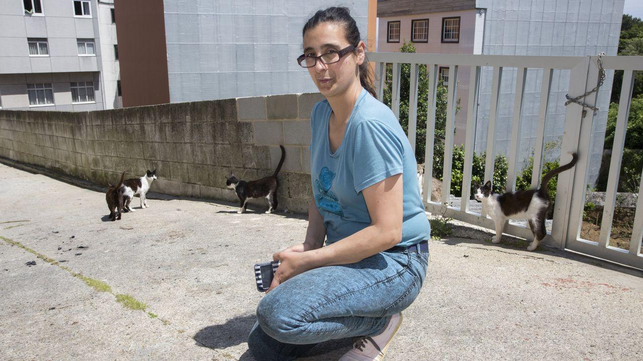 Laura cuida y da de comer a varios gatos