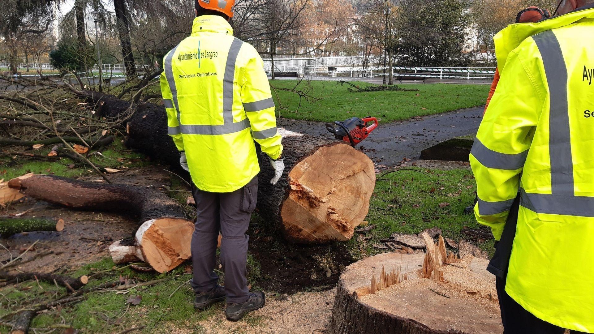 langreo empleo.Trabajadores municipales en la tala de un árbol en el parque Dorado de Sama, en 2019