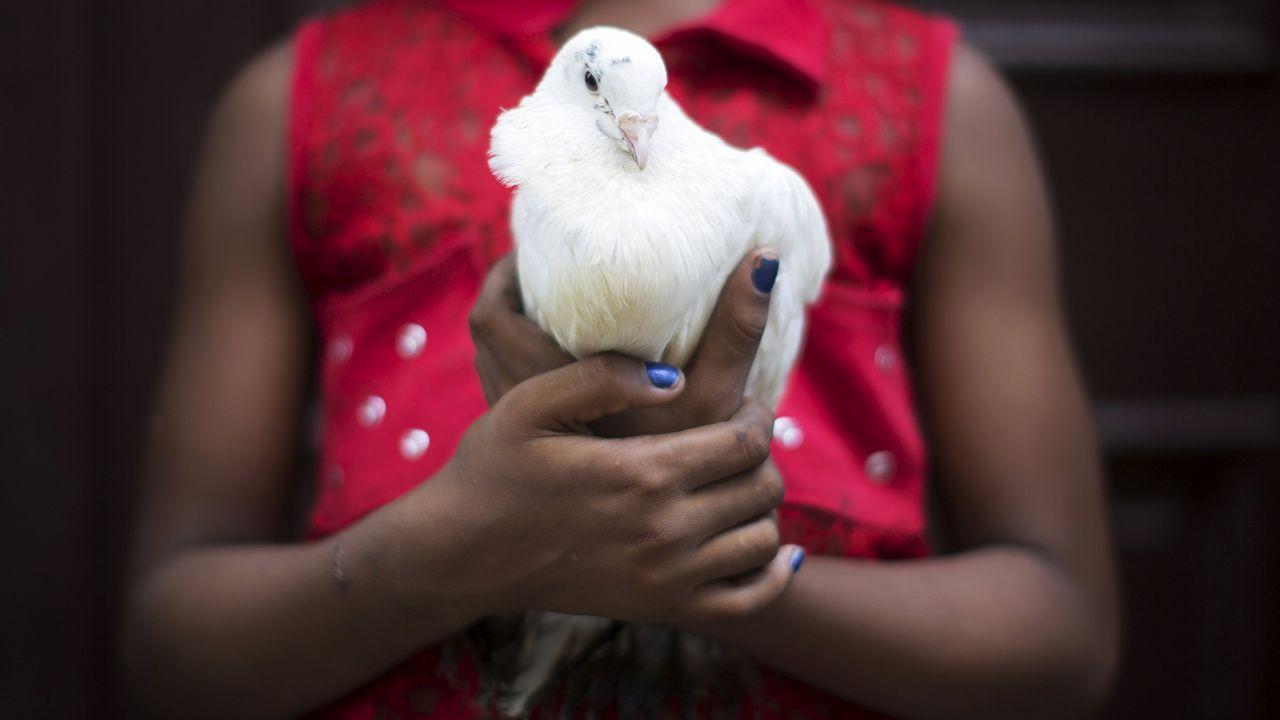 Una paloma utilizada en rituales de santería en Cuba