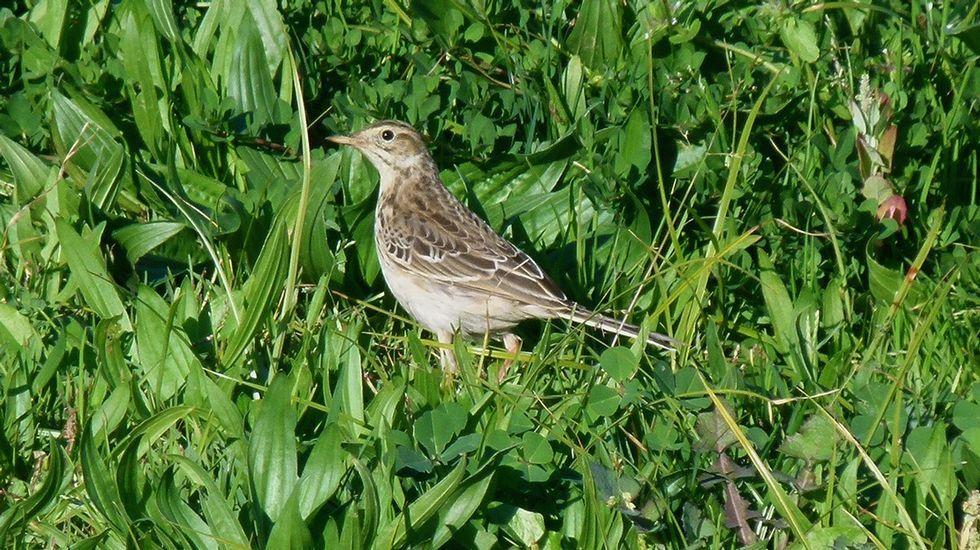 Aves de las rutas ornitológicas de O Courel y el cañón del Sil
