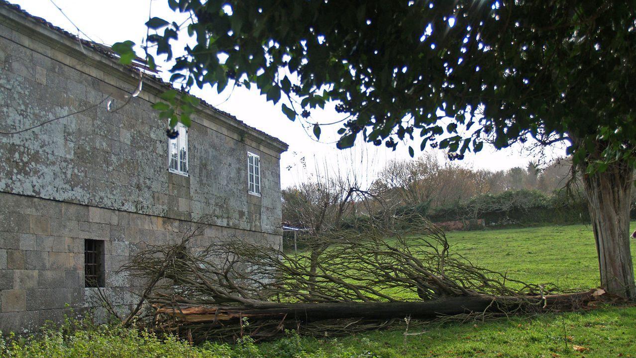 El árbol se partió en la caída y su parte superior quedó depositada en el tejado