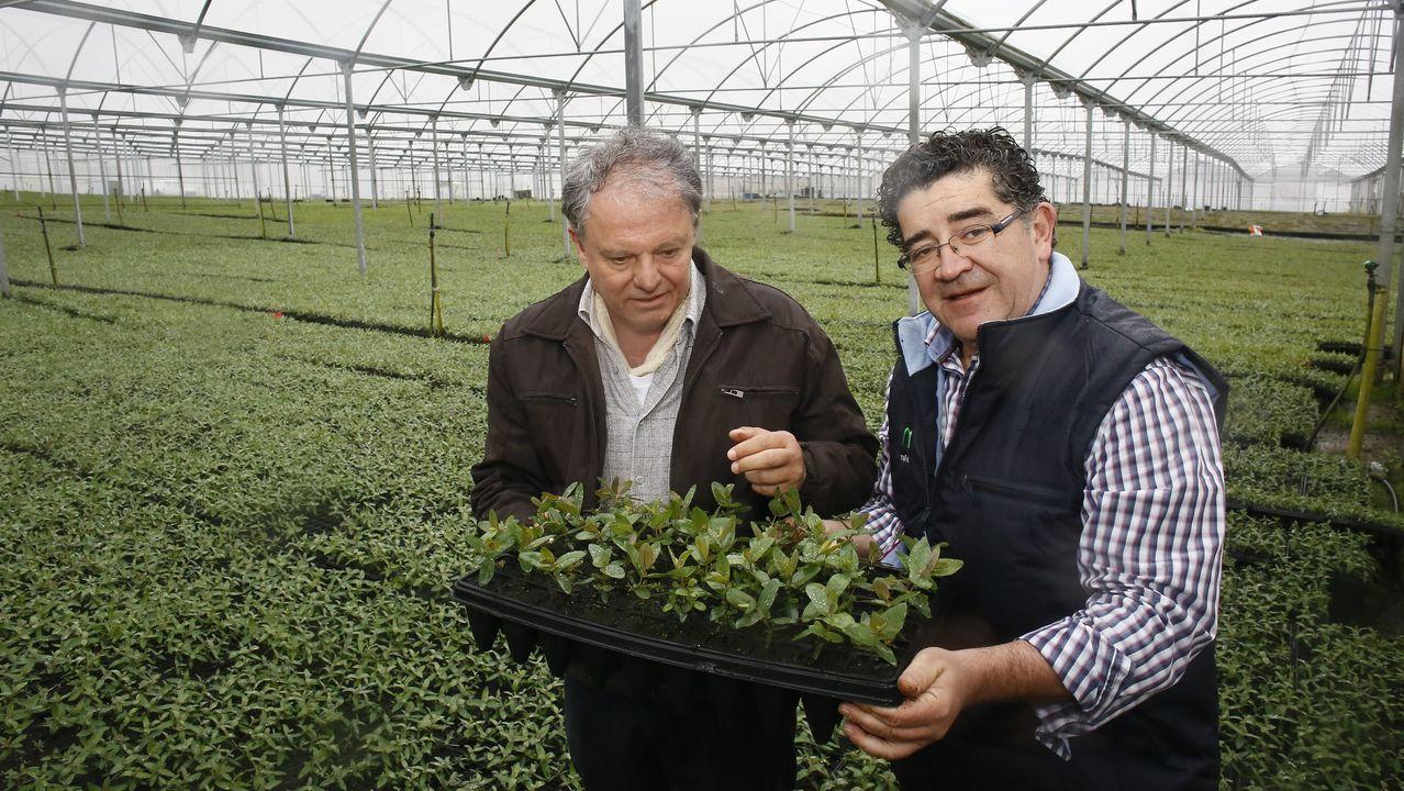 El profesor e investigador José Leonardo de Moraes y el gerente de Viveros Mañente, Enrique Candia.