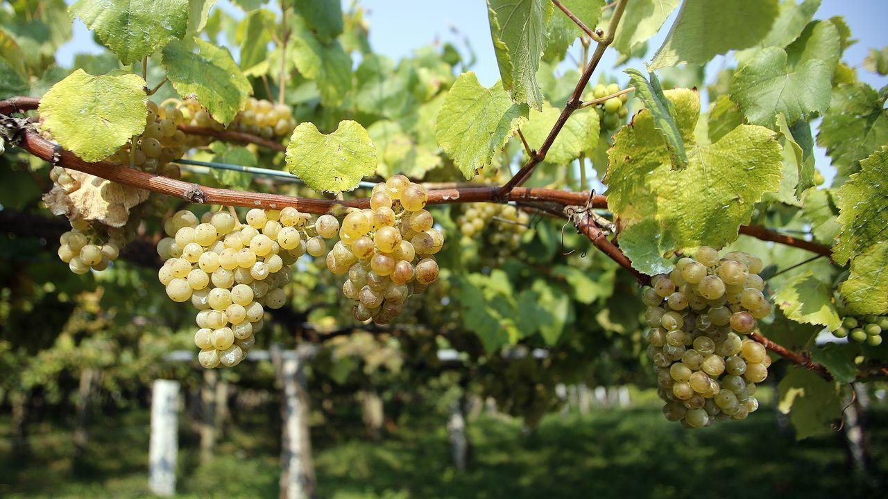 Imagen de archivo de unos viñedos de la denominación de origen Ribeiro